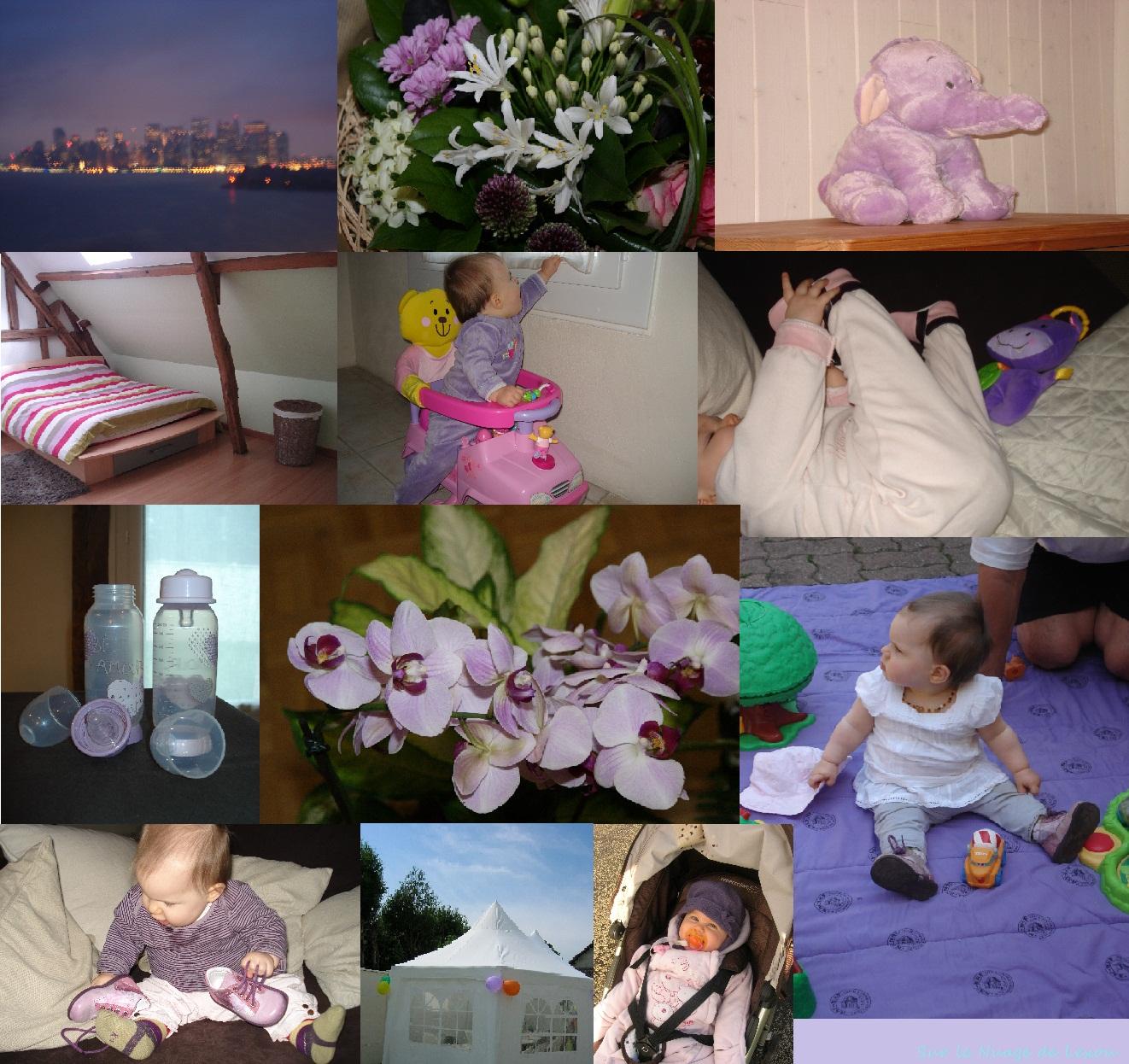 Instants violets...