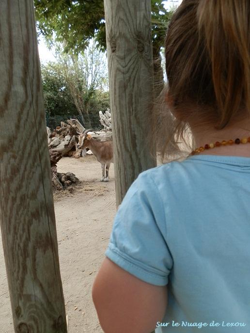 Promenade au zoo...