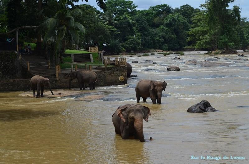 Bain éléphants