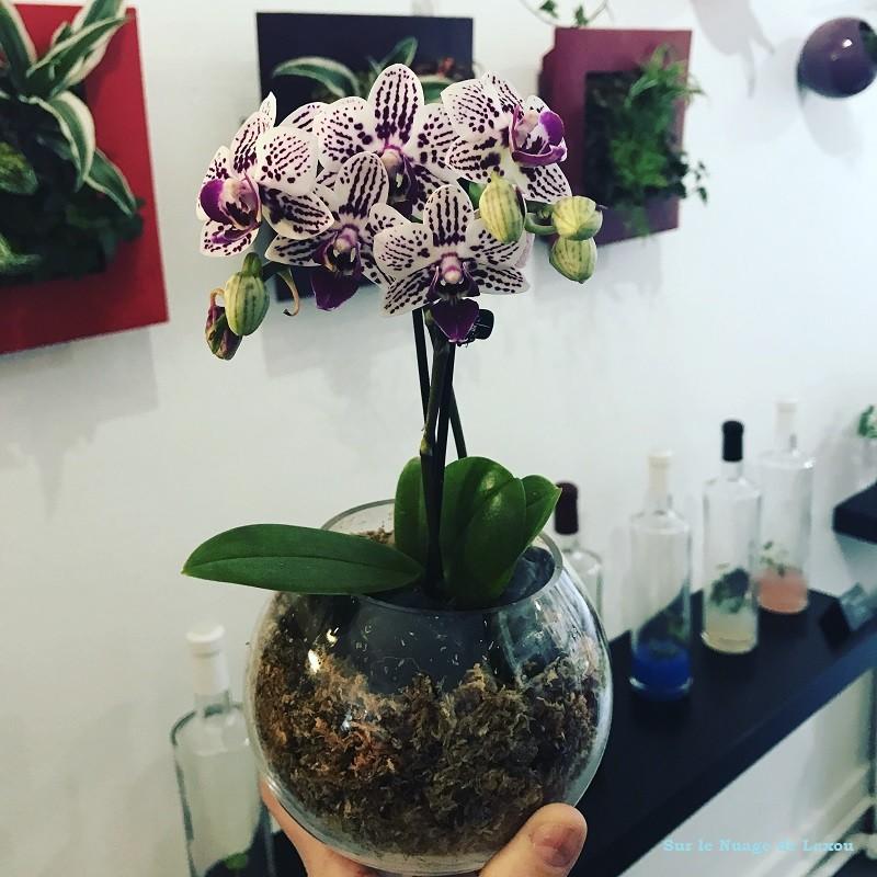 ORCHIDEE MINI BOBY LA PLANTE
