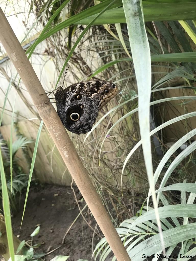carbet-amazonien
