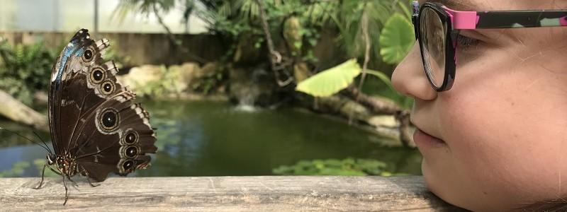 carbet-amazonien-vaucluse