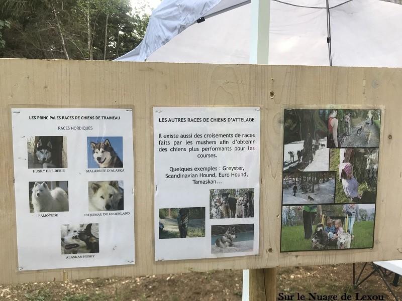 chiens-cani-rando