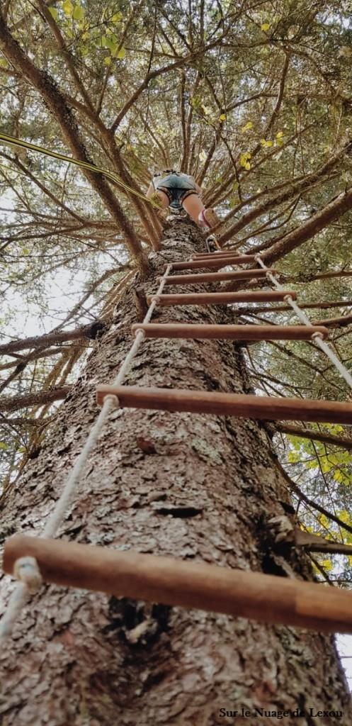 cimes-des-arbres-escalade