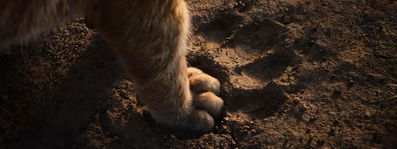 film-roi-lion